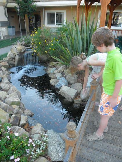 goldfish pond ideas  pinterest pond fountains