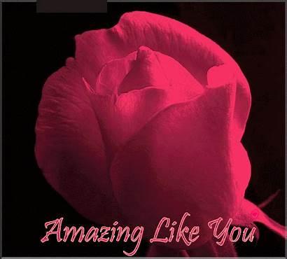 Amazing Animated Rose Flowers Greetings Flower Scraps