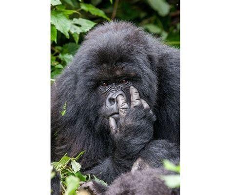 kocaknya foto foto pemenang comedy wildlife