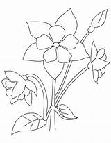 Columbine Coloring Perennial Pages sketch template