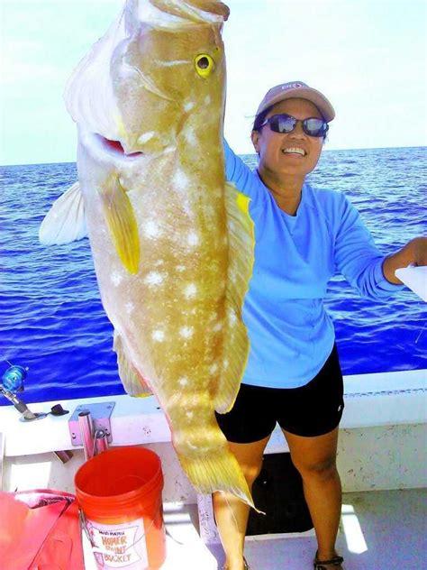 grouper pilchard squid caught