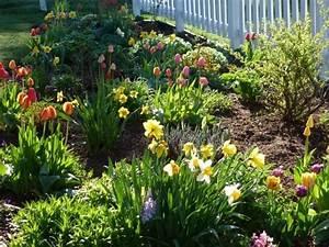Tulpen Im Garten : traumhafte hyazinthen narzissen und tulpen im ~ A.2002-acura-tl-radio.info Haus und Dekorationen