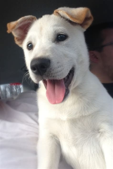 cute puppies  tumblr