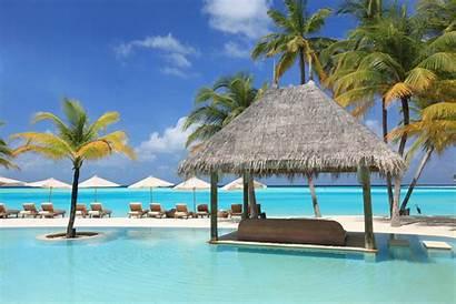 Palm Vacation Pool Trees Sun Beds Wallhere