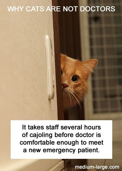 the cat doctor why cats are not doctors medium large