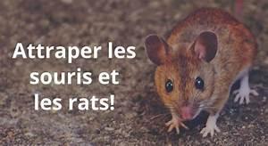 Comment Attraper Une Souris : comment attraper une souris cool vous avez un entrept ~ Dailycaller-alerts.com Idées de Décoration