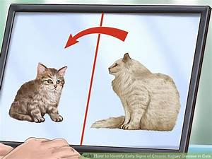 How To Identify Early Signs Of Chronic Kidney Disease In Cats