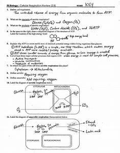 Cellular Respiration Worksheet Answers