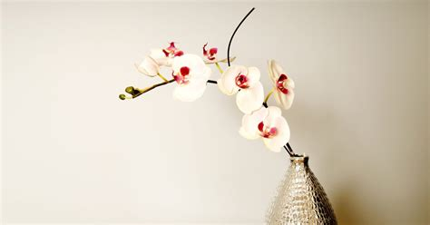 how to cut back an orchid after blooming how to trim back orchids after blooming ehow uk