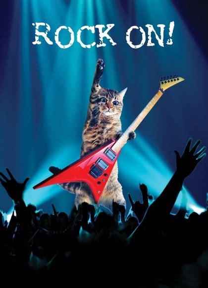 rock star cat