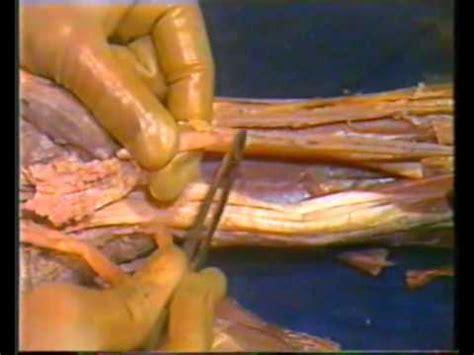 human anatomy upper limb youtube
