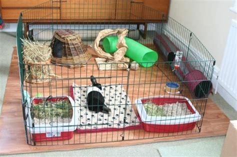 Animali Da Cortile Definizione by Gabbia Per Conigli Conigli Caratteristiche Delle