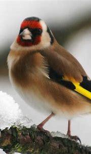 Free Download Wallpaper HD : sparrow bird high resolution ...