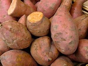 Sweet Potatoes: Short-Summer Varieties - Harvest to Table