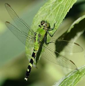 174 Best Dragonfly Pictures Images On Pinterest