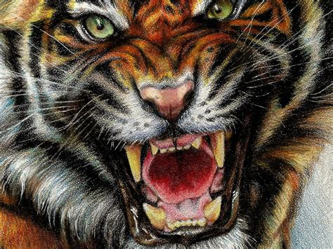 animals digital art drawings paintings tigers wallpaper