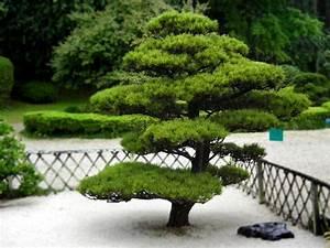 Plante Pour Jardin Japonais : arbuste pour jardin photos de magnolisafleur ~ Dode.kayakingforconservation.com Idées de Décoration