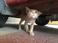 Cat Hiding Eyes