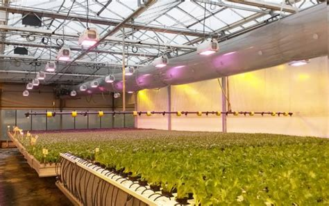 Led greenhouse lighting democraciaejustica commercial greenhouse lighting lighting ideas aloadofball Images