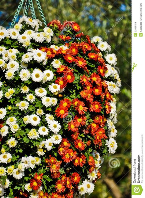 flower bokeh royalty  stock images image