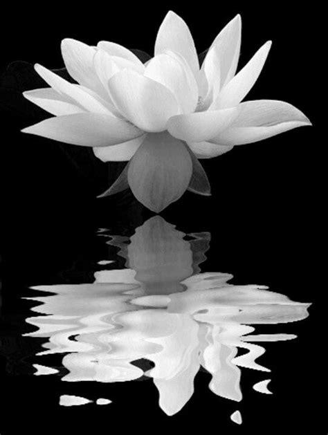 Symbolism of Lotus guitar - The lotus is symbolic of