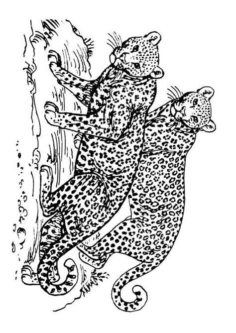 Kleurplaat Panter by Kleurplaat Luipaard Afb 16631