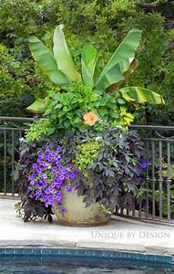 Beautiful container by Unique By Design | Plants | Pinterest