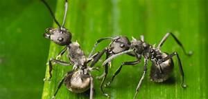 Garten Schädlinge Bekämpfen : ameisen bek mpfen im garten haus ~ Michelbontemps.com Haus und Dekorationen