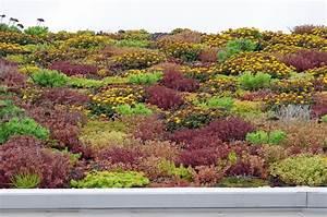 Extensive Dachbegrünung Pflanzen : extensive dachbegr nung mit bl hton drau en pinterest extensive dachbegr nung ~ Frokenaadalensverden.com Haus und Dekorationen