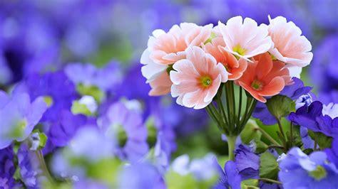 flores papeis de parede hd planos de fundo