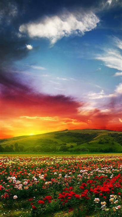 Flowers India Valley 4k Roses Sunset Clouds