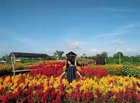 wisata    klaten taman bunga kebon asri tiket