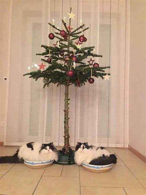 16 pet proof christmas trees pleated jeans