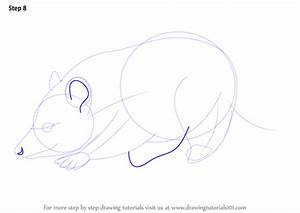 Learn How To Draw A Virginia Opossum Wild Animals Step