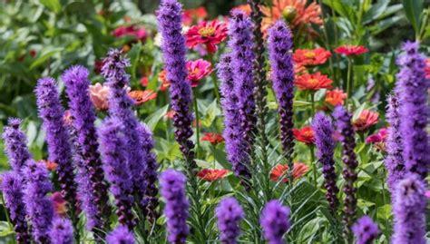 27 augi dārzā, kas piesaistīs tauriņus un bites - DELFI