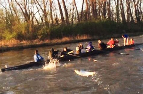 Asian Carp Attack Boat by Moment Hundreds Of Leaping Carp Attack