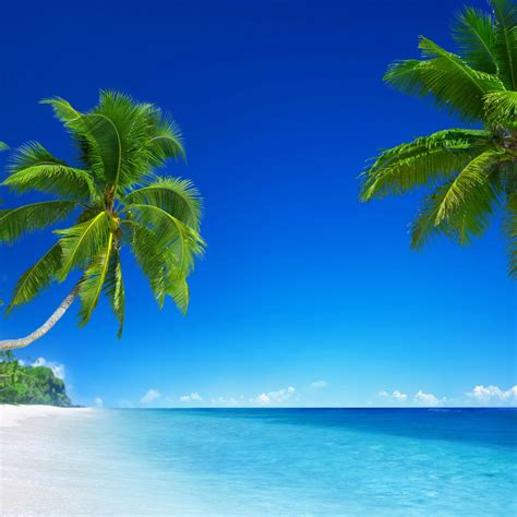 Beautiful Tropical Beach 4k Ultra Hd Wallpaper