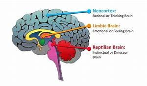 Primitive Brain