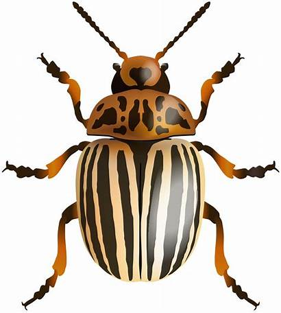 Beetle Clipart Clip Arthropod Insects Transparent Link