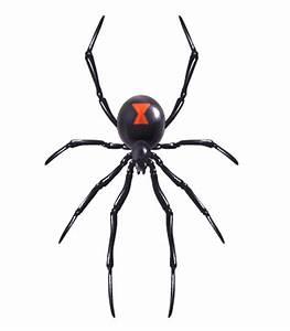 Realistic spider vector design - Vector Animal free download