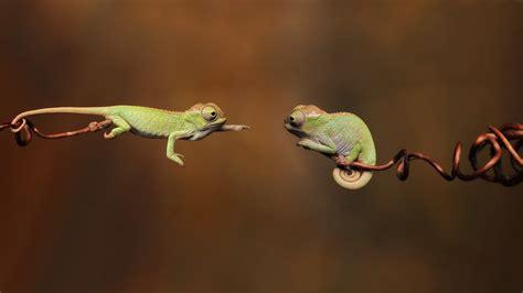 funny chameleon   news icon