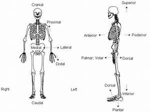 Bone Microstructure