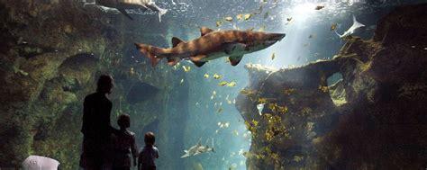 la rochelle aquarium poitou charentes