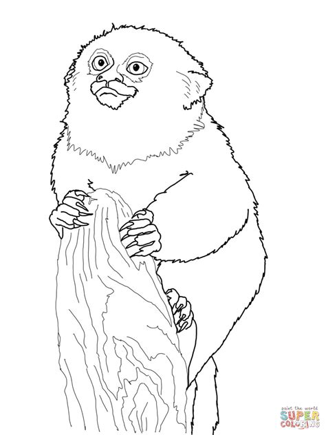 pygmy marmoset monkey coloring page  printable coloring pages
