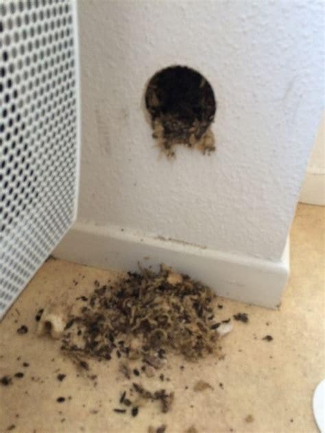 rat dans le plafond rats d 233 ratisation d 233 ratiseurs exterminer mort aux rats