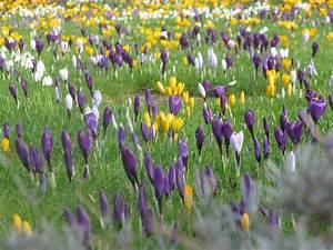 File:March flowers.JPG - Wikimedia Commons
