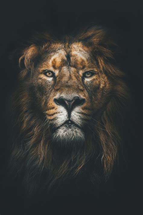 Best Animal Wallpapers - animal wallpapers wallpapers for tech