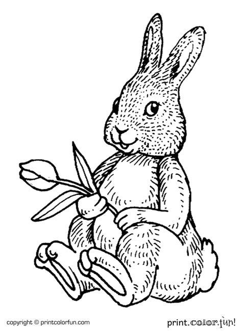 rabbit   flower coloring page print color fun
