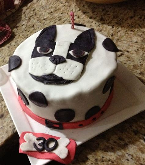 boston terrier cake everydaypins pinterest terriers