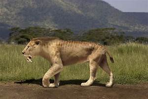 Picture 3 of 8 - Sabre-Toothed Tiger (Smilodon Populator ...